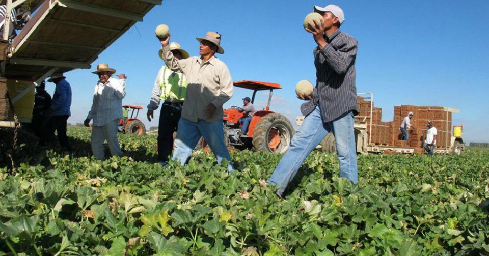 Union, advocates, growers, reps agree on residence requirements for undocumented farmworkers