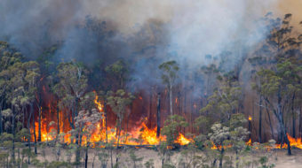 Half a billion animals may have been killed by Australia fires