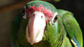 48 especies de animales salvadas de la extinción