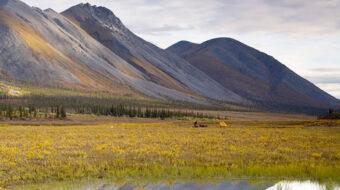 Carrera contra el último pulmón natural de Norteamérica