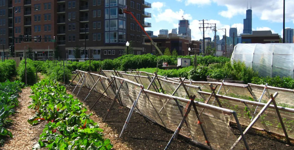 54 million in U.S. may go hungry during the pandemic – can urban farmers help?