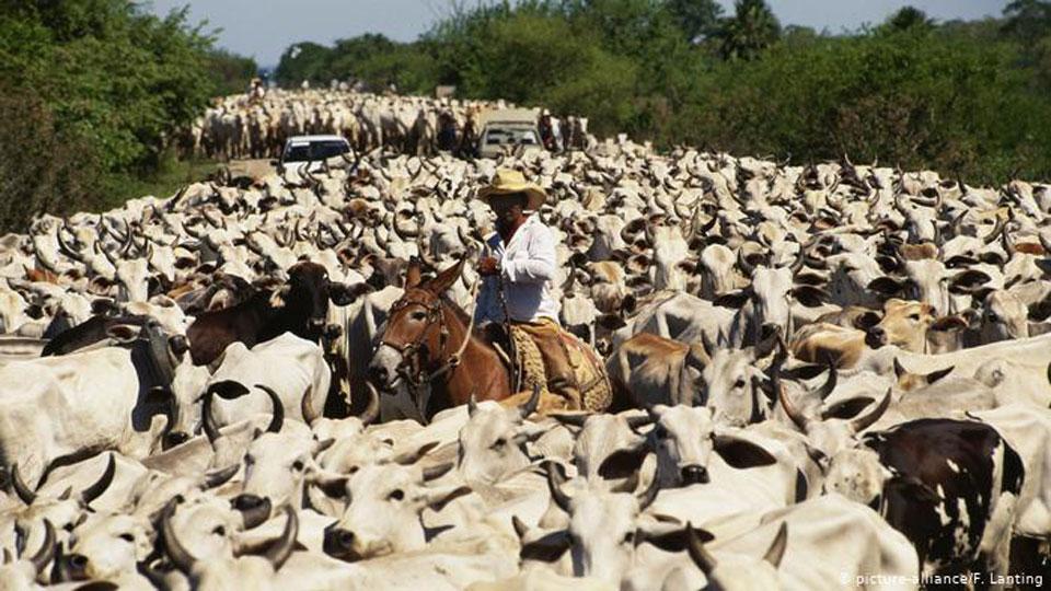 Global demand for meat propels deforestation in Brazil, says report