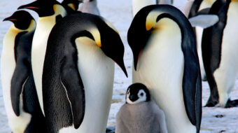 COVID hits Antarctica, scientists extremely concerned for its wildlife