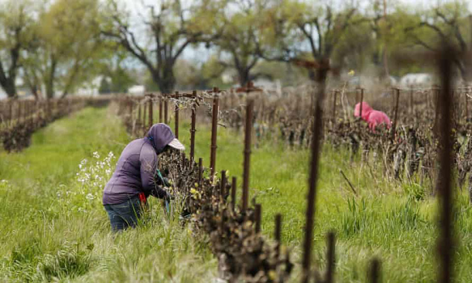 Case before Supreme Court may be definitive for farmworker rights