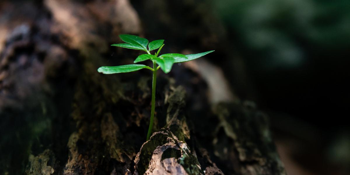 ONU FAO acogerá Simposio Mundial sobre Biodiversidad de los suelos