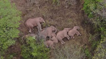 Chinese wanderers remind us of the global threats to elephants