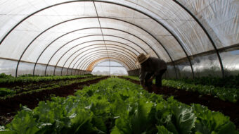 Farm solidarity: Lessons to learn from Cuba's regenerative agriculture