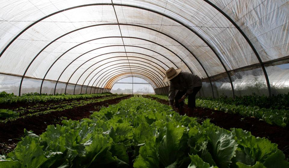 Lecciones que aprender de la agricultura regenerativa de Cuba