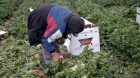 Why working in the fields is no laughing matter